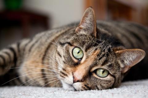 article-cat-boarding-1.ashx