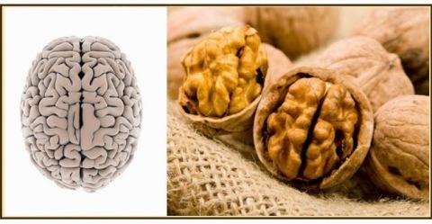 nuez tiene la forma del cerebro