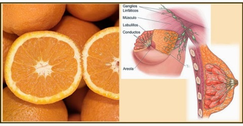naranja tiene la forma de las glandulas mamarias