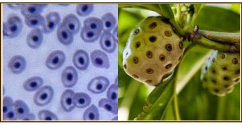 celulas muy similar a la guanabana
