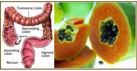 La Papaya tiene el poder de limpiar el colon, y se puede observar la semejanza en un corte transversal de la fruta..