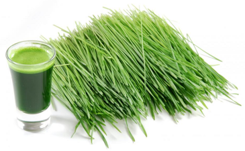 health-benefits-of-wheat-grass