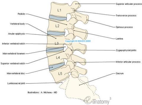 Como usar la arcilla para el tratamiento de la columna vertebral