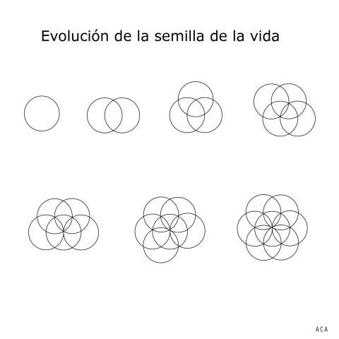 evolucion_semilla_dela_vida0