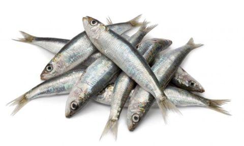 karl5008-como-limpiar-las-sardinas-xl-668x400x80xX